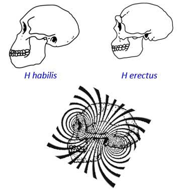 habilis-erectus.jpg
